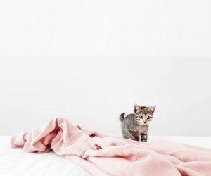 animali, daily, and fotografia image