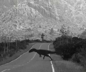 dinosaur, black and white, and road image