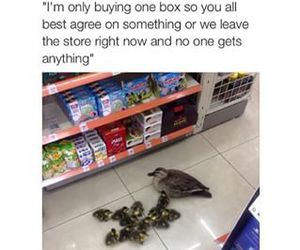 funny, ducks, and lol image