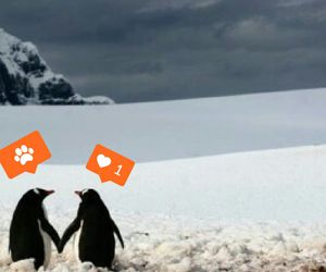 animals, couples, and penguin image