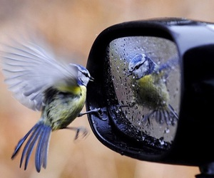 bird, mirror, and rain image