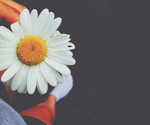 blomma, flower, and tumblr image