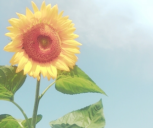 summer, sunflower, and 向日葵 image
