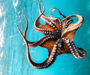 sea, animal, and octopus image