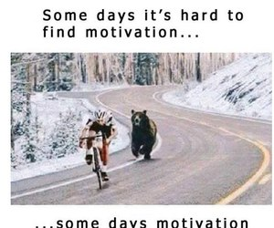 motivation, funny, and bear image