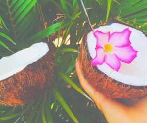 coconut, flowers, and summer image