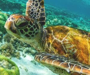 sea, sea turtle, and summer image