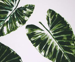 background, leaves, and wallpaper image