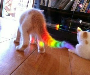 cat, rainbow, and funny image