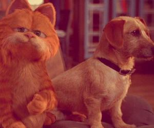 cat, cute, and funny garfield image