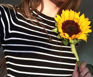grunge, black, and sunflower image