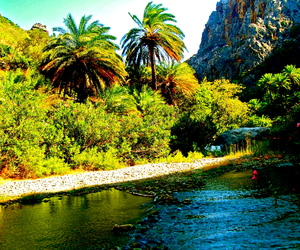 palm tree and river image