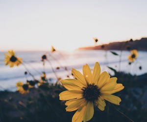 flowers, landscape, and sea image