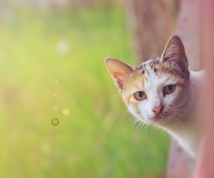cat, outdoor, and soft image