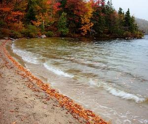 autumn, fall, and sea image