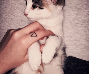cat, life, and tattoo image