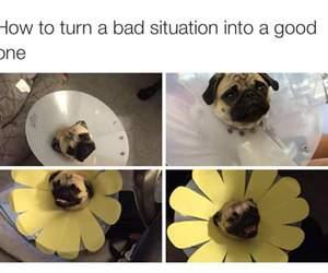 funny, dog, and pug image