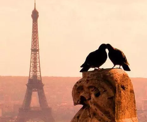 paris, love, and bird image
