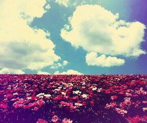 flowers, sky, and garden image