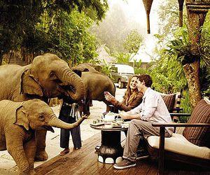 elephant, travel, and animal image