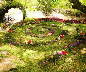 fairy ring, nature, and beautiful image
