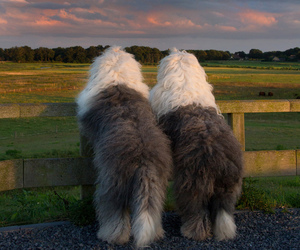 dogs, sunset, and view image