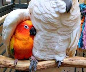 bird, animal, and parrot image