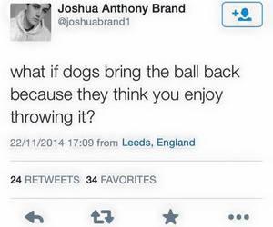 dog, ball, and funny image