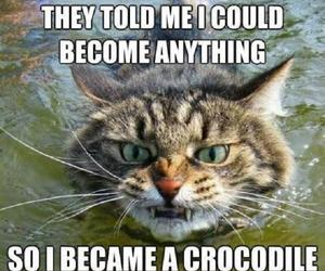 cat, crocodile, and funny image