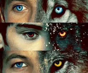 one direction, wolf, and liam payne image