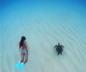 turtle, sea, and summer image