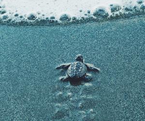 amazing, beautiful, and nature image