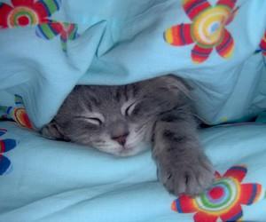 animali, animals, and cats image