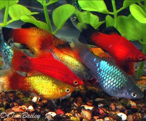 aquarium, fish, and vibrant image
