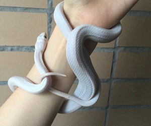 hand, snake, and white image