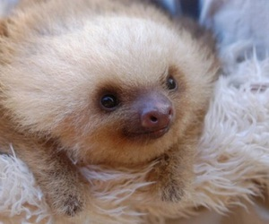 sloth, baby, and cute image