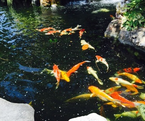 algae, fish, and gold image