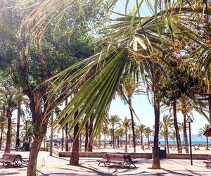 palm trees, summer, and asw image