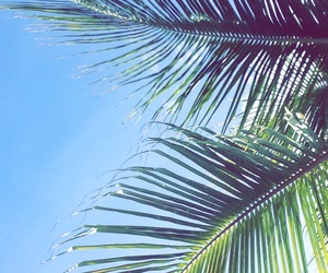 green, summer, and palm trees image