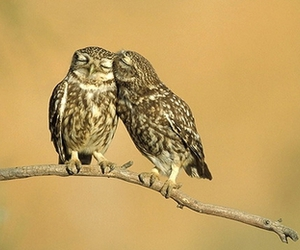 owl, owls, and love image