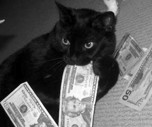cat, money, and black and white image