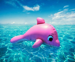 summer, dolphin, and pink image