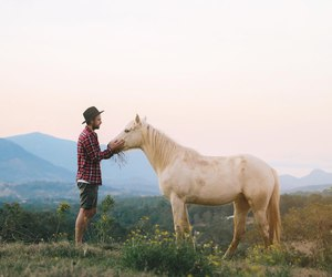 horse, landscape, and nature image