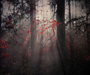 forest and red image