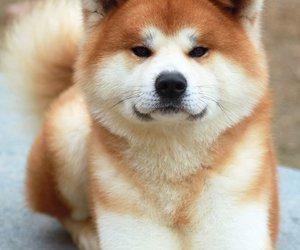 dog, cute, and akita image