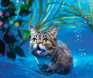 lil bub and cute image