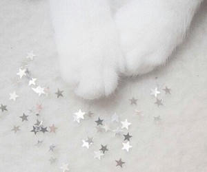 cat, white, and stars image