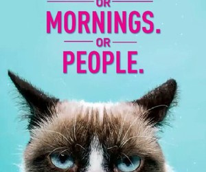 cat, morning, and grumpy cat image