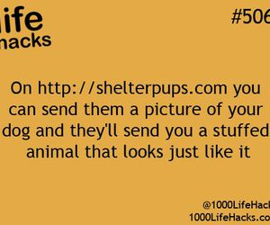 dog, life hacks, and animal image