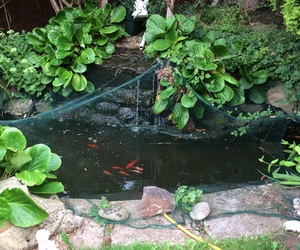 fish, garden, and green image